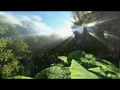 Floresta 3D Forest HD God Ray color correction animated  trees and animals - YouTube