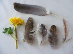De buit! #watdoetvanessanu #vogels #nature
