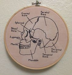 Skull Diagram Embroidery Anatomical Skeleton Art Science