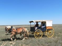 Discover nature at Bent's Old Fort National Historic Site -- Belgian draft horses give rides in the Forts Dearborn wagon. Santa Fe Trail, Old Fort, Draft Horses, Forts, Historical Sites, Nature, Animals, Naturaleza, Animales