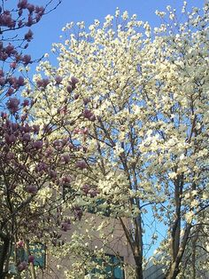 """트위터, @agathawow  """"꽃은 언제나 아름답습니다. 이세상도 항상 아름다울 수 있다면 얼마나 좋을까요"""" #평화꽃"""