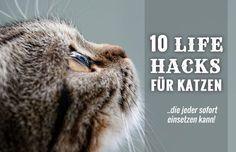 Lifehacks sind kleine Tricks und Handgriffe, die das Leben leichter machen. Lifehacks für Katzen sind besonders für Leute geeignet, die Geld sparen möchten und gleichzeitig Wert auf eine katzengerechte Wohnung legen. Viele der nachfolgenden 10