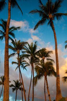 Maui - Hawaii - USA