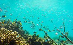 Capricorn Great Keppel Island - Capricorn Tourism QLD