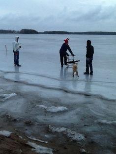 Familycompetition on ice Lake Saimaa