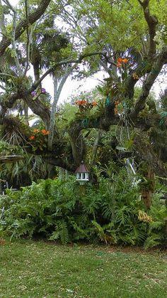 Orchid display on tree.