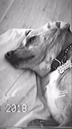 Toulouse, Ariana Grande, Pup, Queen, Dogs, Dog Baby, Pet Dogs, Puppies, Doggies