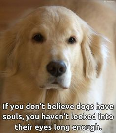 Everything we all respect about the Outgoing Golden Retriever Puppies I Love Dogs, Puppy Love, Cute Dogs, Animals And Pets, Funny Animals, Cute Animals, Baby Animals, Dalai Lama, Dog Quotes Love