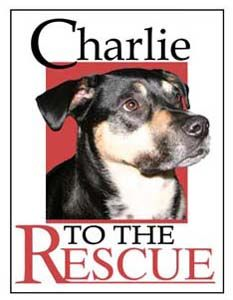 Please sign up on CHARLIE TO THE RESCUE CROSSPOSTS on Facebook too!! LET'S HELP SAVE SOME MORE LIVES!!!!  https://www.facebook.com/groups/charliecrossposts/