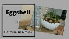 11# Eggshell with flower bulbs and moss