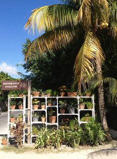 VISIT TULUM - Best Restaurants in Tulum, Mexico