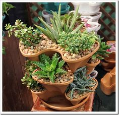 cool vertical container for succulents