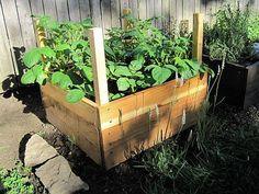 A burgonya egy olyan zöldség amelynek fogyasztása jó hatással van a szervezetünkre, csak sajnos az utóbbi időben annyira leértékelték ennek a zöldségnek a jótékony hatását,[...]