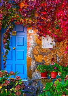Blue door, orange wall, red ivy, green plants. GORGEOUS!