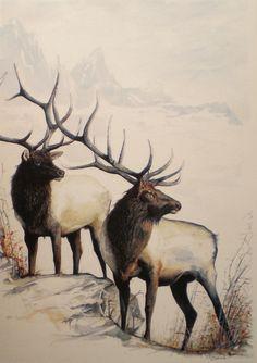 Twosome Art Card Note Card Elk Watercolor Wildlife by elkman, $3.00