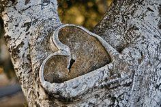 Heart in tree