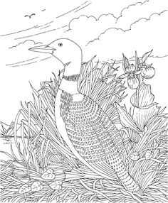 Free Printable Coloring Page...Minnesota State Bird and Flower, Common Loon, Lady's Slipper, educational printables