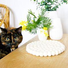 Große Augen für einen schönen und kuscheligen #Filzkugeluntersetzer! Kein Wunder, da diese mit 100% purer #Wolle aus #Neuseeland hergestellt werden. Dies verlangt einen langen #Fertigungsprozess, der ganz von Hand durchgeführt wird. Erfahren Sie mehr dazu hier: https://vimeo.com/136214347