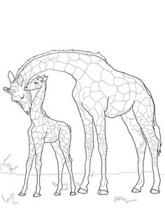Click to see printable version of Baby Giraffe and Mother coloring page