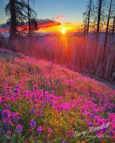Colores de primavera!
