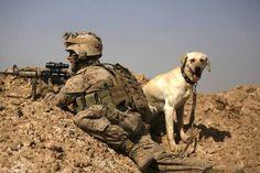 アフガニスタンで爆弾探知犬とともに警戒任務に就く米海兵隊の兵士(2010年02月17日) 【AFP=時事】