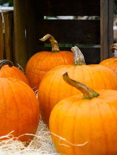 GRESSKAR-til-mat-og-Halloween
