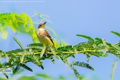 Bird by MohmedAbdulsalam. Please Like http://fb.me/go4photos and Follow @go4fotos Thank You. :-)