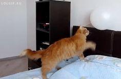 http://cat-shaming.tumblr.com/page/2