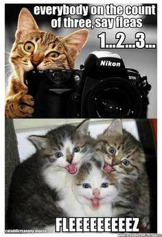 Google Image Result for http://img.ibtimes.com/www/data/images/full/2012/08/02/292786-love-cats-catspeake-on-facebook-spreading-see-10-of-the-cutest-cat-mem.jpg