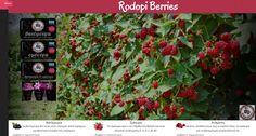 http://www.rodopiberries.gr/