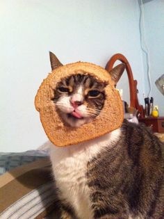 breading....im so gonna do this to my cats some day...soon!
