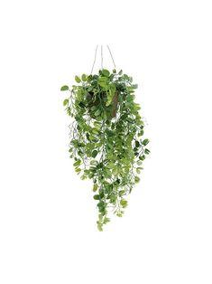 Plant Illustration, Botanical Illustration, Tree Photoshop, Plant Art, Leaf Art, Photoshop Elements, Trees To Plant, Cute Wallpapers, Indoor Plants