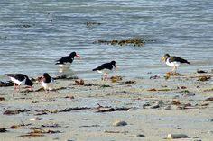 Amazing bird life on Scilly