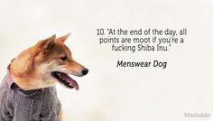 Menswear Dog Fashion Tip