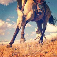 ride baby ride cowgirls, horses, horse photography, dream life, happy dogs, countri, friend, thing, fields