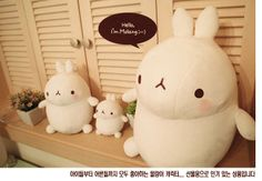 ♥ Molang Rabbit