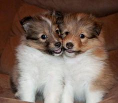 Babies!  ~ EVEN PUPPIES ARE SO SWEET TEMPERED ~