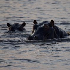 Ok don't anybody get out of the boat  #botswana #adventureswithdad #safari #Sunset