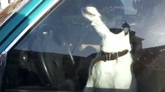 DRIVE SCHOOL WITH A DOG