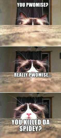 I personally love memes and funny cat memes are my personal favorite. Who could resist adorable images of cats, dogs, and other animals next to a funny tagline? Cat Memes To Make You Laugh Until You Cry! Funny Animal Quotes, Animal Jokes, Cute Funny Animals, Cute Baby Animals, Funny Cute, Cute Cats, Super Funny, Animal Captions, Mom Funny