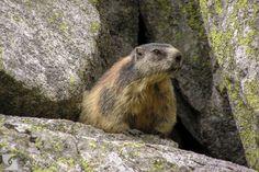 The Tatra Mountains, Poland. Tatra Mountains, Brown Bear, Wild Animals, Wildlife Photography, Poland, Pictures, Wild Ones, Nature Photography