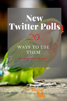 Twitter recently released a new feature: Twitter Polls. This new type of tweet allows you to ask your audience questions and get a statistic answer