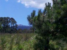 Por la zona boscosa...