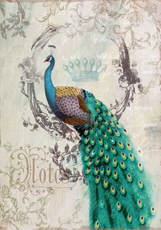 VINTAGE PEACOCK BIRD DECOR * LARGE A3 QUALITY CANVAS ART PRINT  #Vintage offered by poppyland_art on eBay
