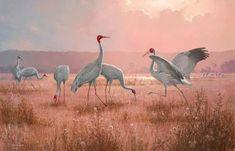 Cranes: Brolgas and Sarus Cranes by William T Cooper (b.1934)