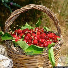 Basket full of.......