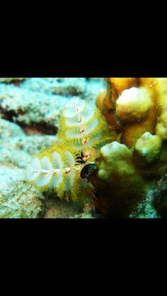 14 Fun Facts About Marine Bristle Worms Marine Ocean Water Life Pinterest Natur Tiere And Naturbilder