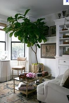 Fiddle Leaf Fig - i want one! abode love: a man's home is his wife's castle: fiddle leaf fig tree Decor, Apartment Inspiration, Home, Indoor Plants Apartments, Home And Living, Interior, House Interior, Living Spaces, Big Plants