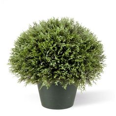 National Tree Company 15 In Juniper Bush In Dark Green Round Growers Pot Lcb4