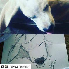 Noi non troviamo nessuna differenza!! .  #Repost @_always_animals_ with @repostapp  Ditemi se non è uguale  #dog #ritratto #cane #love #italia #bausocial #draw #puppy #labrador #retriever #toelettatura #petsitter #dogsitter #perro #inu #photooftheday #beautiful #amazing #cute #vsco